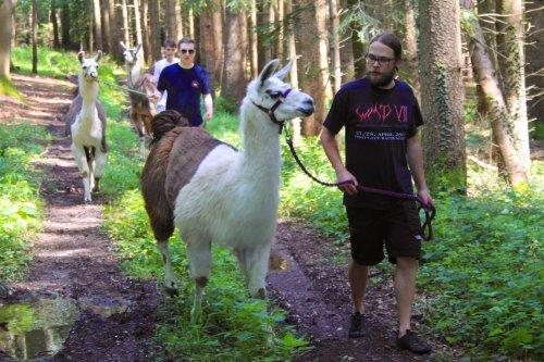 Lama Wanderung im Wald - World-of-edv Kollegen gemeinsam mit den Lamas
