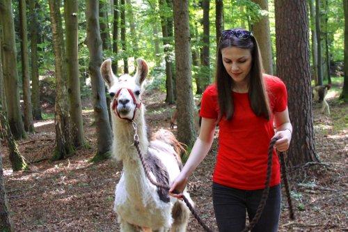 Kollegin Kinga mit Lama im Wald - Teambuildingmaßnahme Lamawanderung