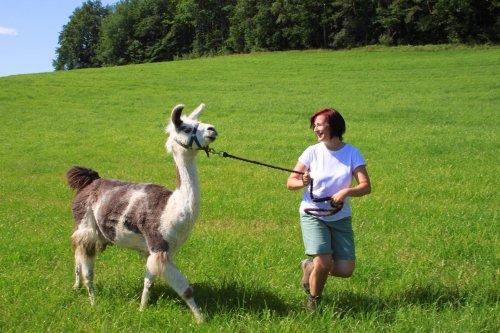 Lama Wandern - Teambuilding Maßnahme - Geschäftsführerin Katerina Wagner mit Lama